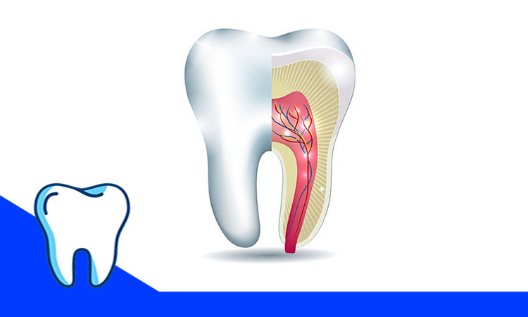 ایجاد دندان با سلول های بنیادی